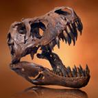 Dinosauri: dove si collocano nella storia?