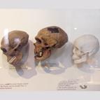 Nuove scoperte minacciano l'ingannevole teoria di Darwin