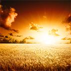 La risurrezione di Gesù avvenne di Sabato!